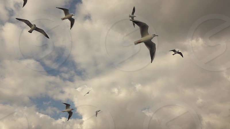 Panoramic view of a flying seagulls on a background of dramatic cloudy  Turkey Istanbul. Slow motion Full HD video 240fps 1080p. photo