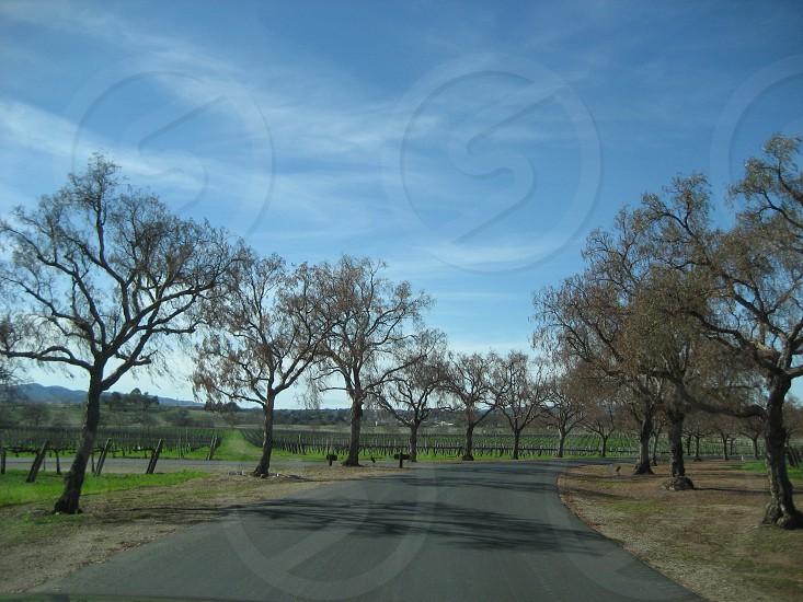 Santa Barbara - California photo