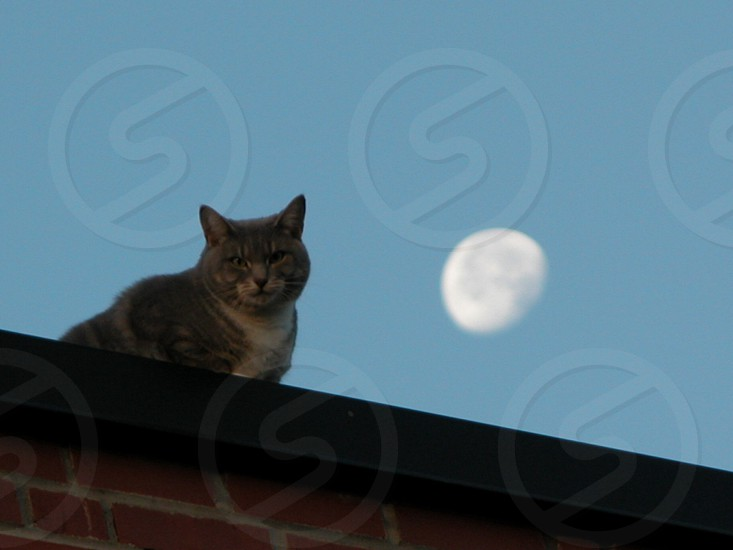 Cat on roof photo