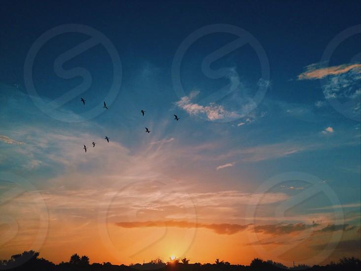 Tiny birds #nature #skies #sunsets  photo