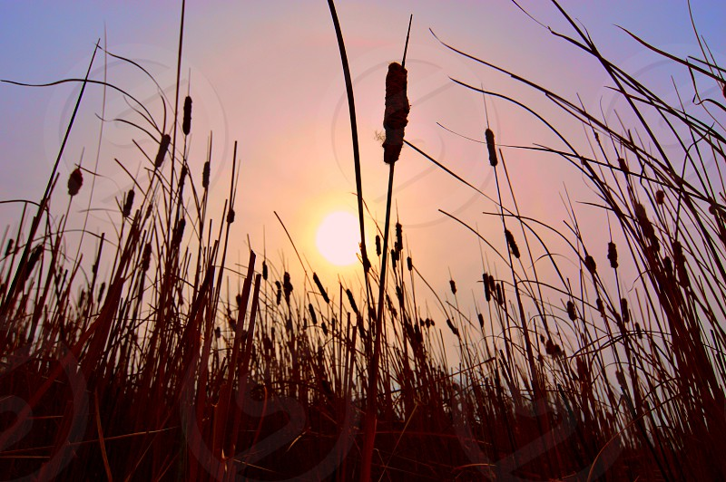 Perspective Colorful Nature Sun Sky photo