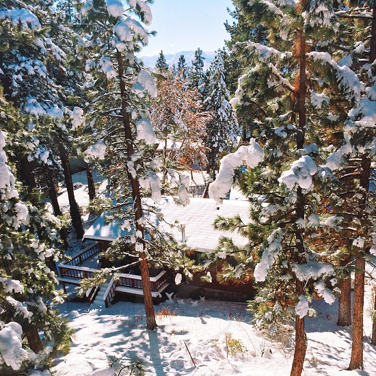 snow on trees and house roof photo photo