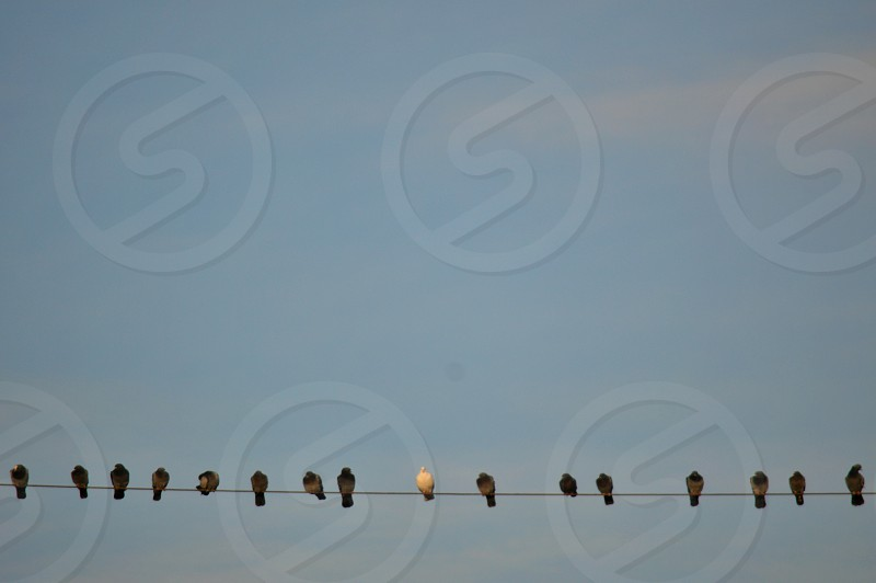 birds sitting on power line under blue sky and white clouds photo