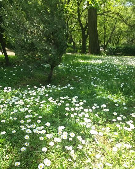 Beautiful spring flowers. Nature. Park. photo