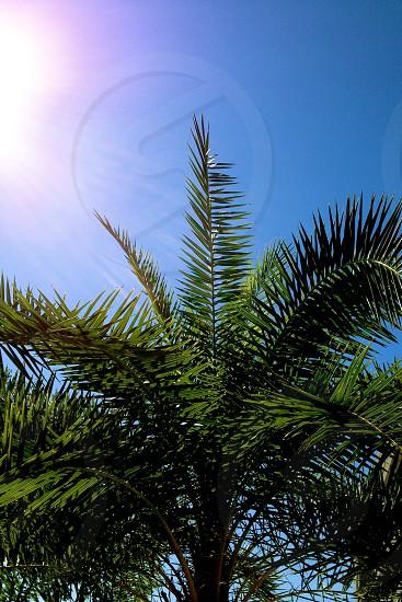 Palmetto tree basks in the sun photo