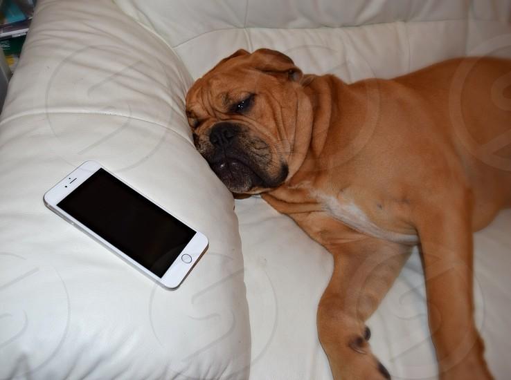 Dog tired iphone 6 photo