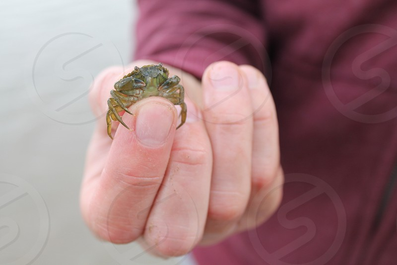 Tiny crab photo