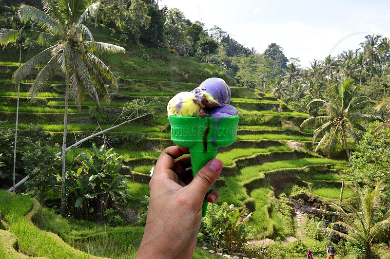 hand holding ice cream paddy field as background photo