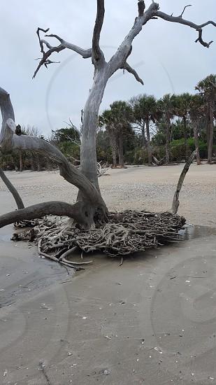 botany bay beach island photo