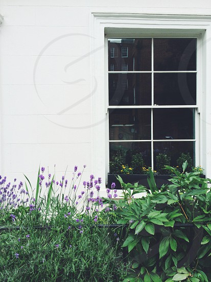 house window with bushes photography photo