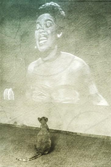 My friend listening the jazz music. #cat #friend # wall # jazz # music #animal #home  photo