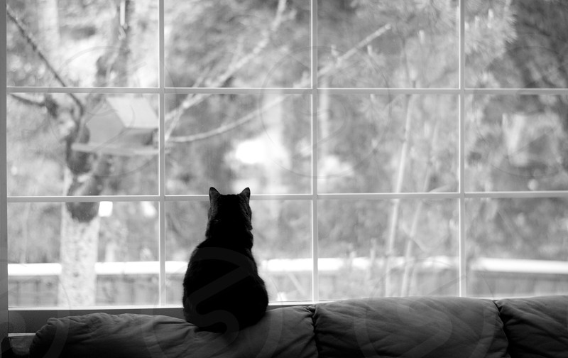 Waiting for birds photo