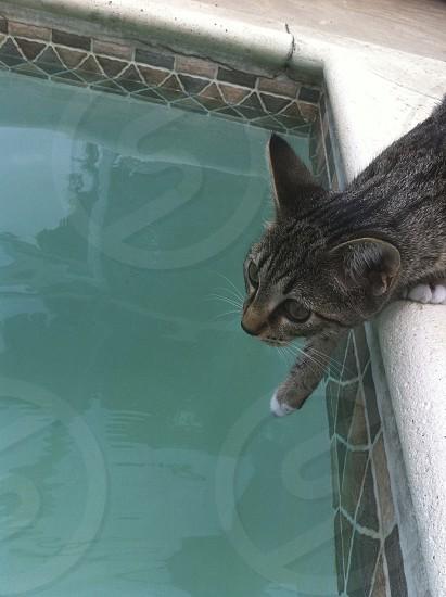 cat pool water photo
