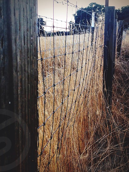 Fenced In - Northern California  photo