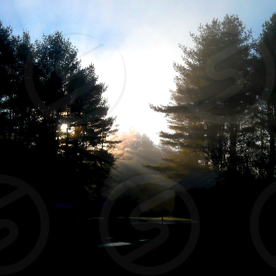 This foggy fall morning the sun was shining through the space in the woods.  photo