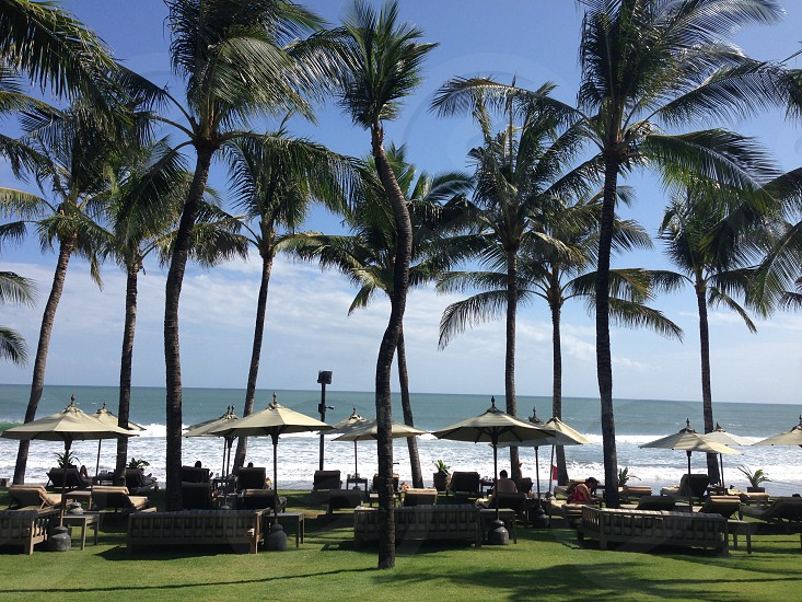 white patio tables above green grass field surrounded by coconut trees beside sea during daytime photo