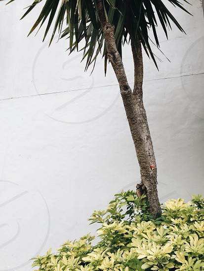 Tree plant photo