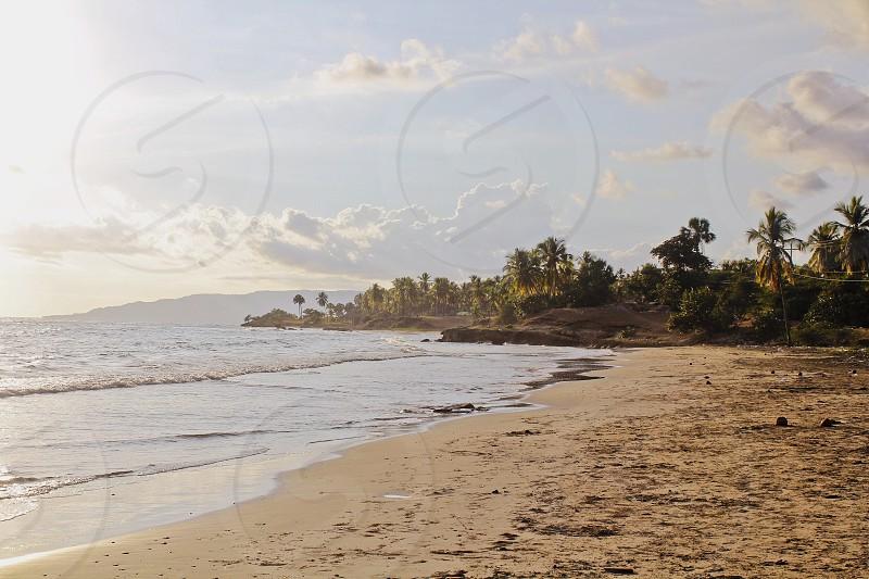 seashore and trees photography photo