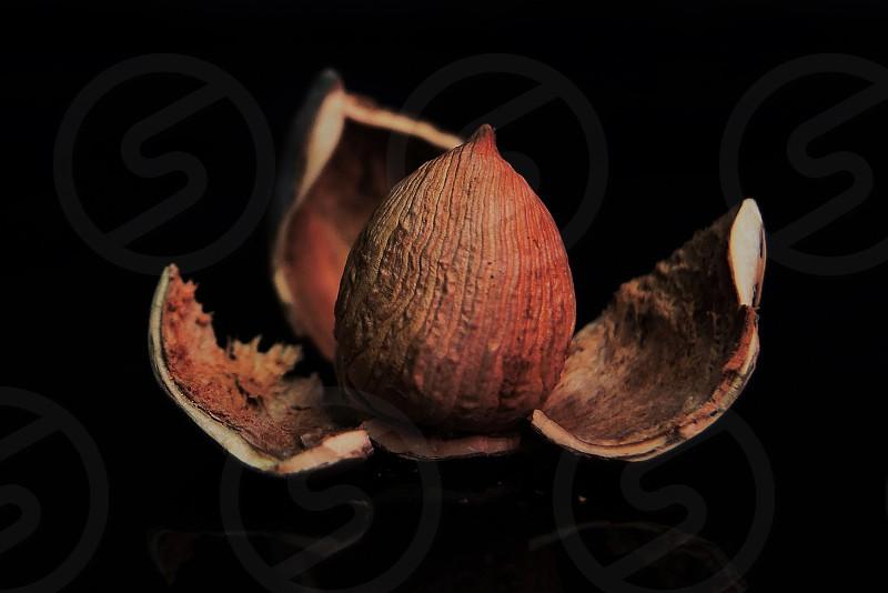 brown nut photo