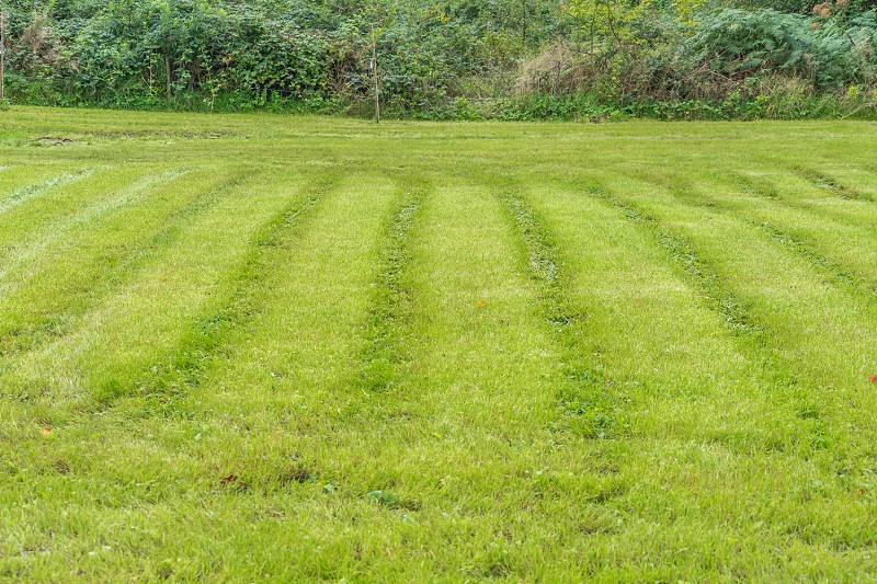 A freshly cut green grass lawn in summertime. photo