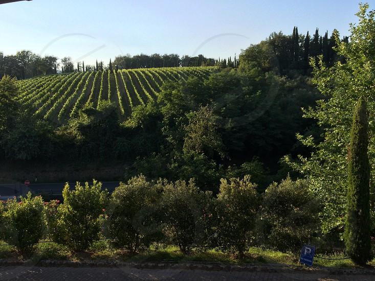 Tuscany View photo