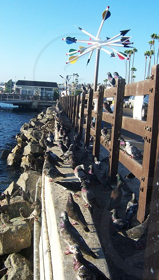 pigeon birds on seashore photo