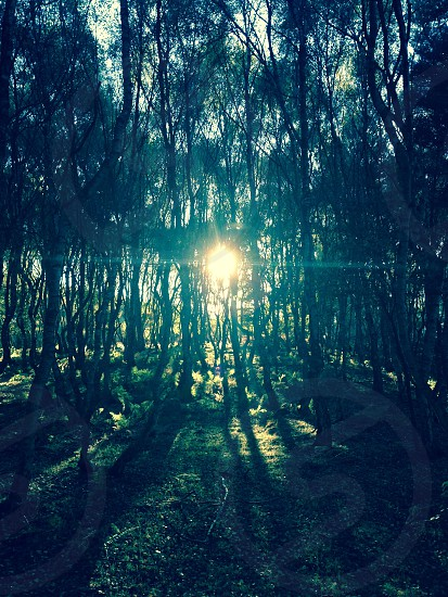 Light through the trees in Sherwood Forest  photo