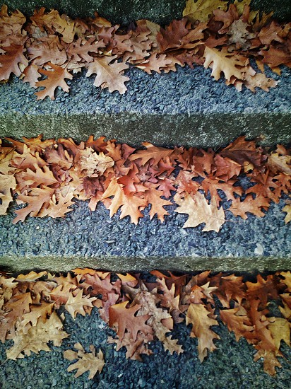 dry leafs on top of gray concrete stairs photo