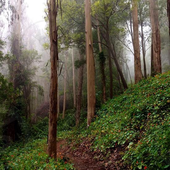 Sutro Forest San Francisco photo