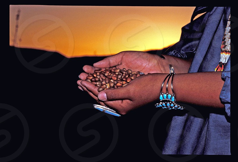 Pinion nuts are a staple food for the Indian tribes of the Southwest that are gathered in the higher regions photo