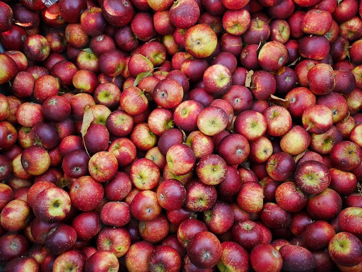 Apples plenty multiple background  picture red red apples vitamin vitamins  health Ingredients ingredient peel multiple fruit fruits Autumn winter  photo