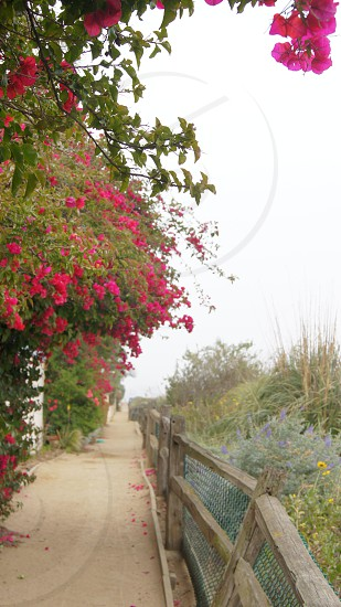 Path Pink Floral California photo