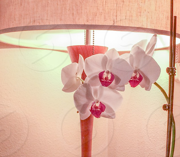 Orchid blossoms houseplant midcentury modern lamp photo