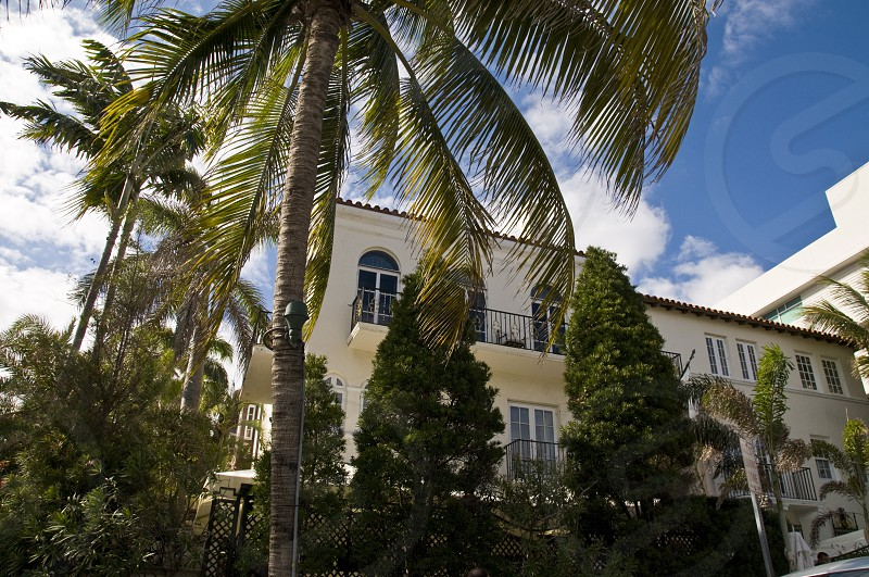 house near trees and coconut palm trees photo