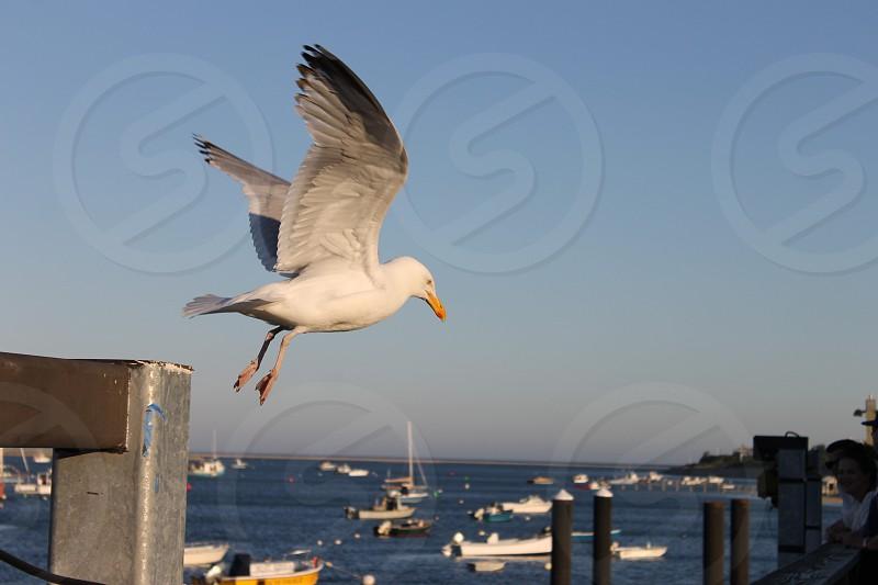 Chatham Harbor Cape Cod photo