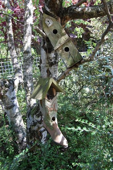 bootgreentreeitalybird housebirdforestgardendreamydreamwoodshoeshoes photo