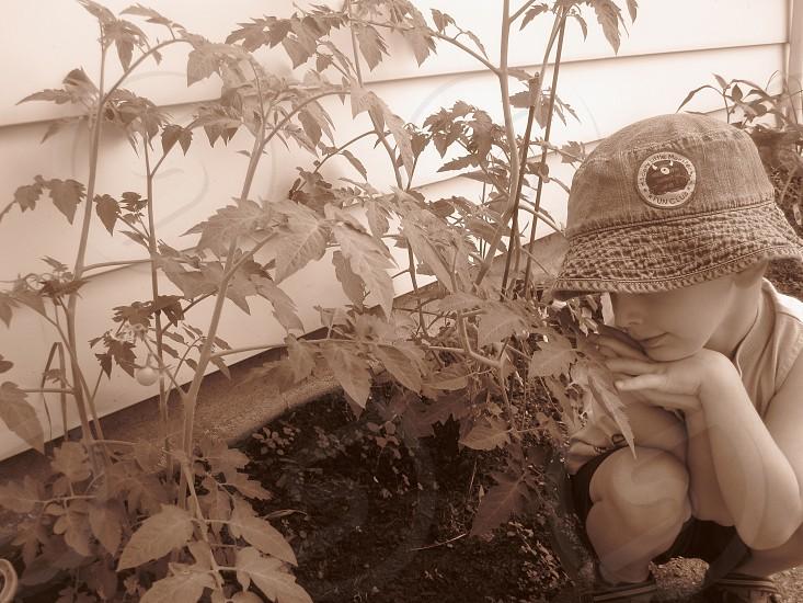 child sitting next to a plant sepia photo photo