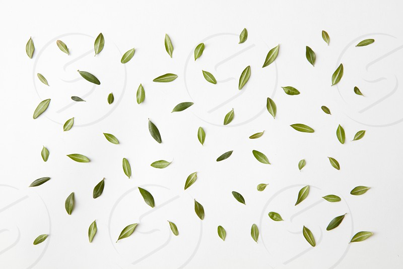 background of green leaves natural background flat lay. photo