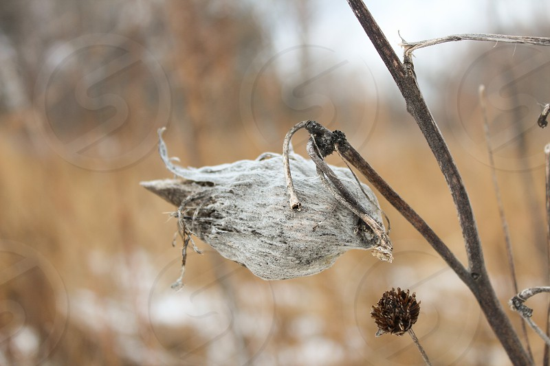winter nature state parks midwest natural plants photo