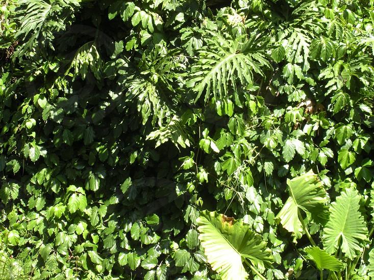 Rainforest forest jungle foliage plants botanical wallpaper  background backdrop photo
