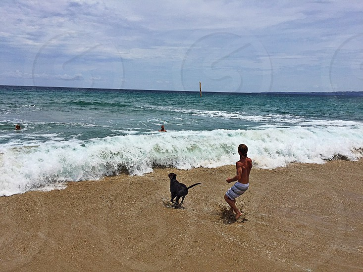 Beach sand ocean surf pet dog photo