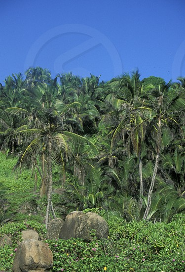 cocosnut trees on a Beach on the coast if the Island La Digue of the seychelles islands in the indian ocean photo