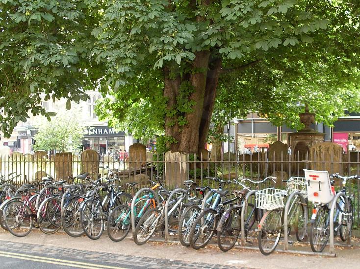 bikes bicycles tree street cemetery graveyard Oxford England photo