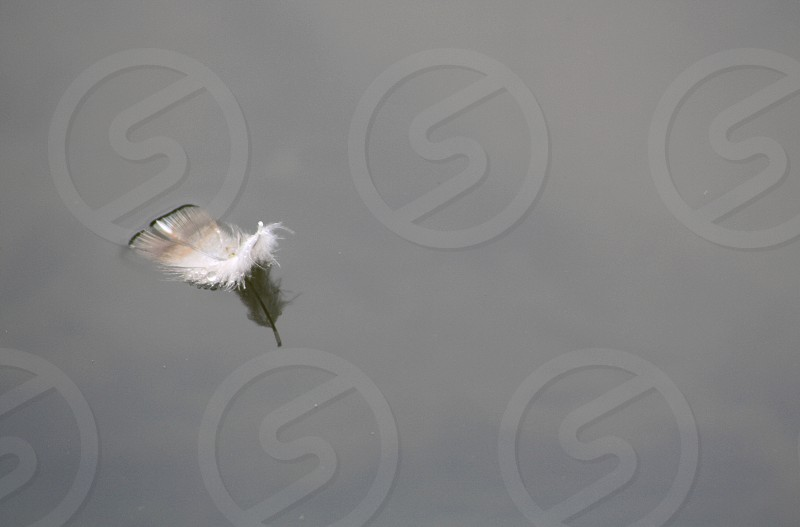 Single small feather floats on a grayish background photo
