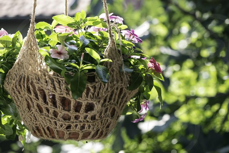 Flowers hanging pot. Sun lights photo