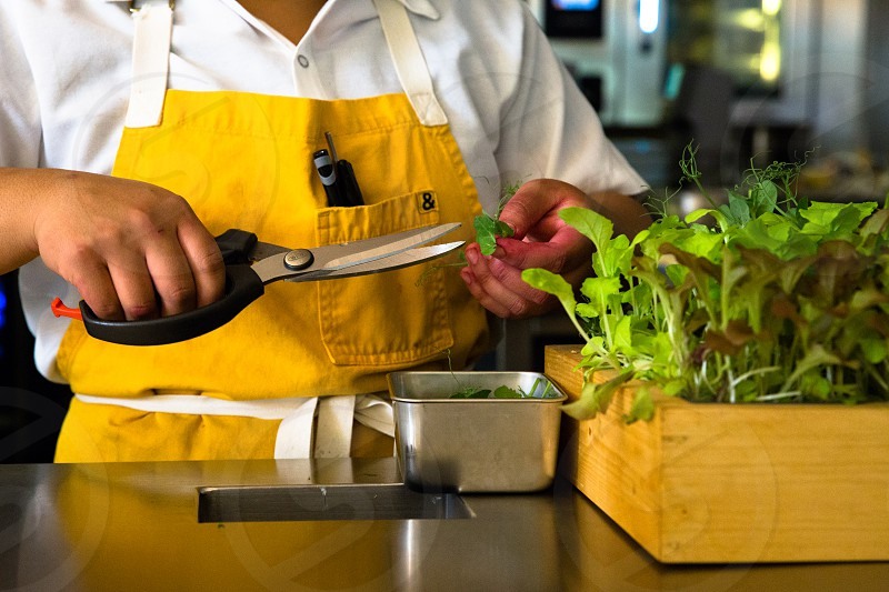 chef preparing herbs photo