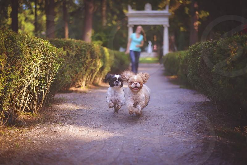 Happy Dogs!  photo