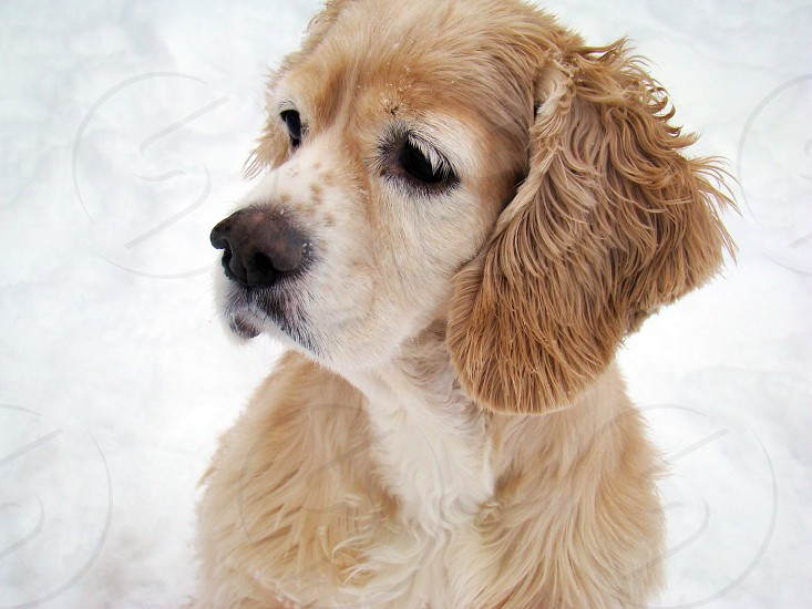 Freckles in the snow photo
