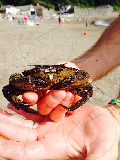Crabbing in Cornwall photo