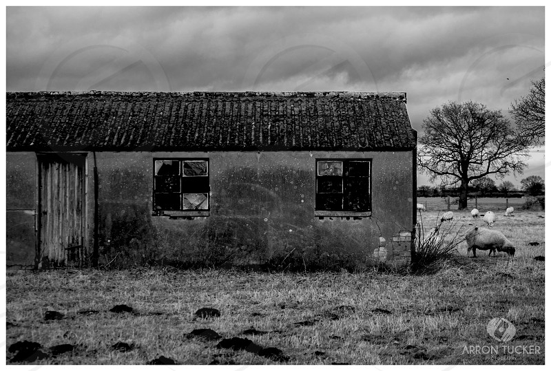 grayscale photo of a house near trees photo